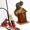 Wow! That Squirrel Repeller is Really Working, Rich