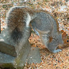 Squirrel Push-Ups!