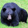 bigbear012