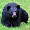 bigbear016