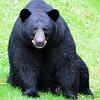bigbear004