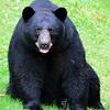 bigbear003