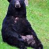 bigbear061