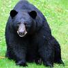bigbear007