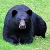 bigbear018