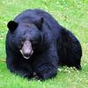 bigbear010