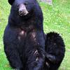 bigbear089
