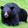 bigbear011