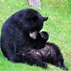 bigbear038