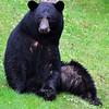 bigbear087