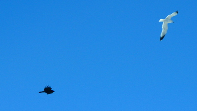 Accompanied By A Crow