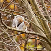Squirrel Way Up In Neighbor's Tree