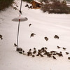Birds at the base of our feeder.