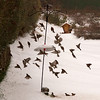 Birds in motion at our feeder.