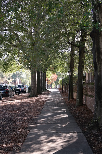 2017-11-13 Autumn Walking Tour Along Senate Street-View up Barnwell Street to USC Campus 2