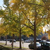 2017-11-13 Autumn Walking Tour Along Senate Street-Trees Outside West Side of SC State Library