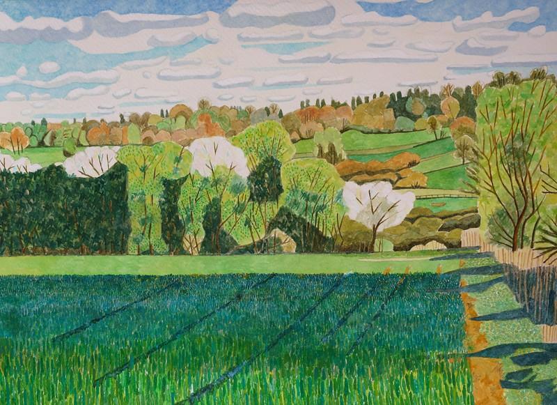 Landscapes - Winter Wheat - Springtime