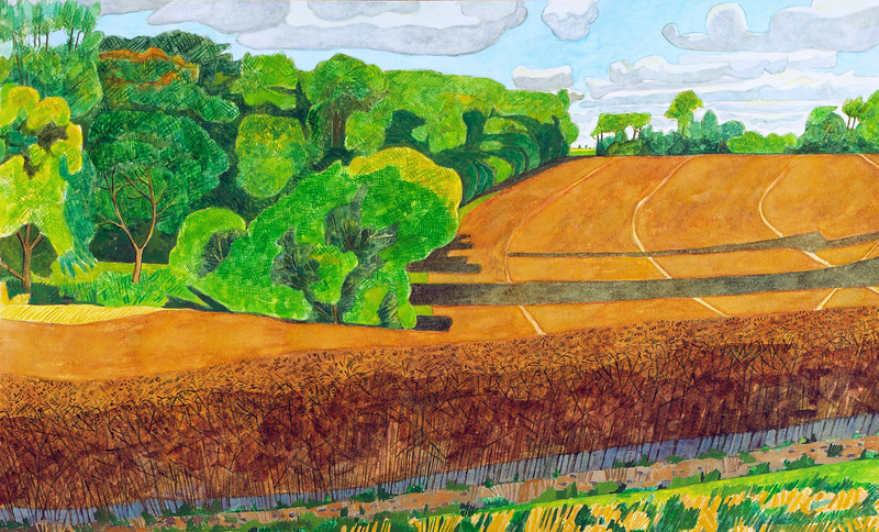 Summer - Oil seed rape near Dunley