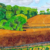 Summer - Oil seed rape near Dunley