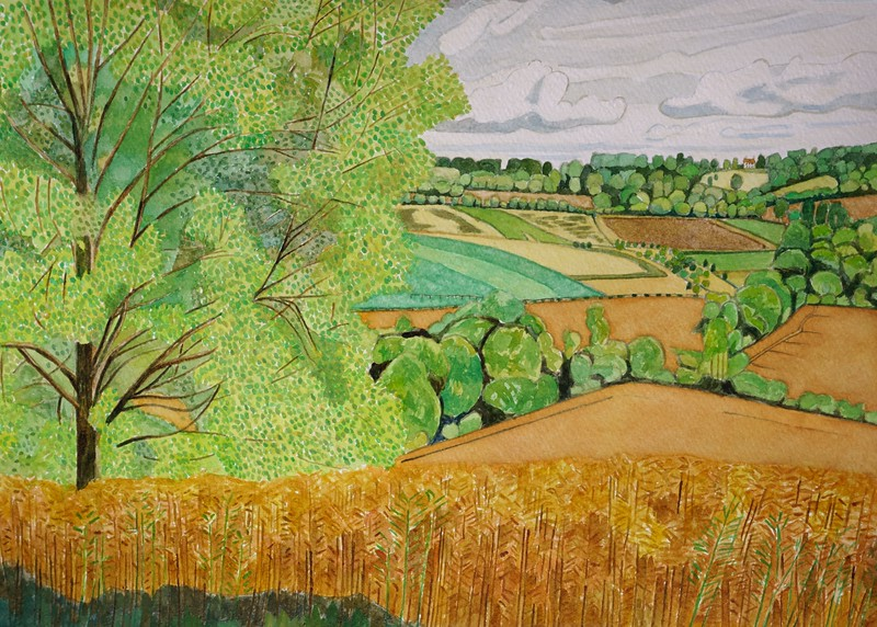 Landscapes - Fields in the Summertime
