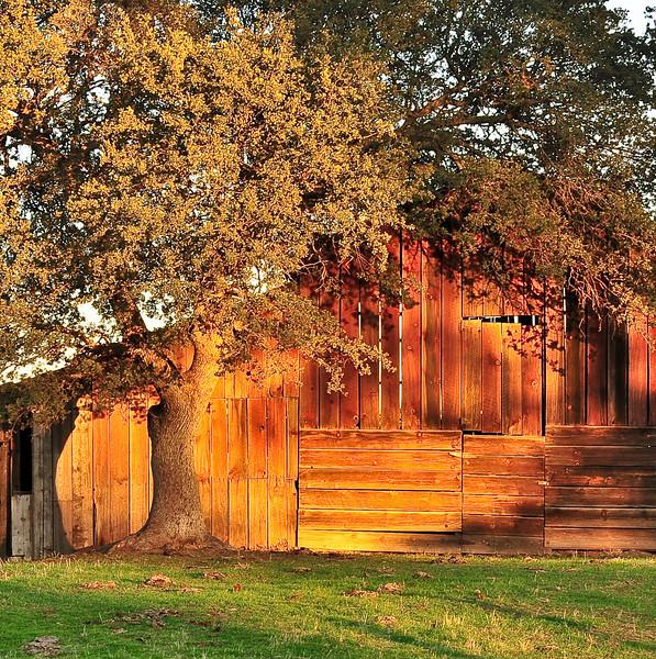 Old barn as dusk approaches