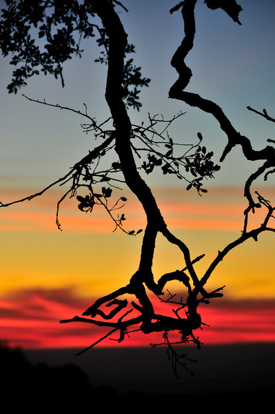 Branch at sunset