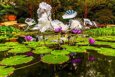 For a whole year the Dallas Arboretum was the home of a sculpture exhibition by Dale Chihuly. The sculptures were well placed around the Arboretum. This is the fusion of art and nature