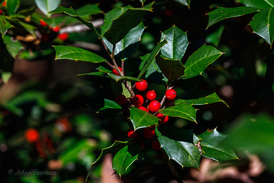 Flagler Garden & Woodland Walk - Holly