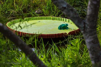 Lego Frog Pad