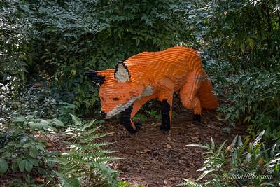 Fox, on Trail of Rabbit