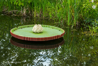 Lego Lily Pad