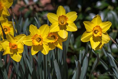 Springtime Cheer