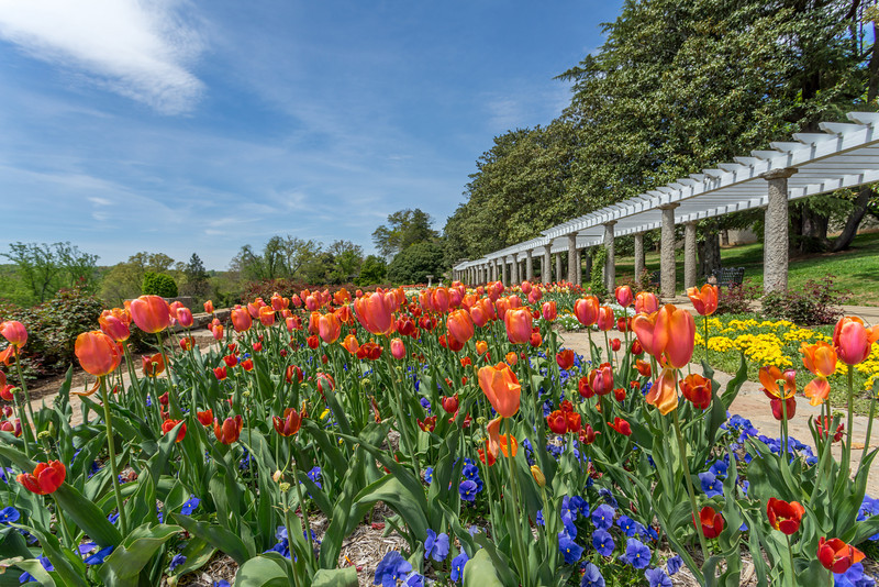 Spring Tulips in the Italian Gardens