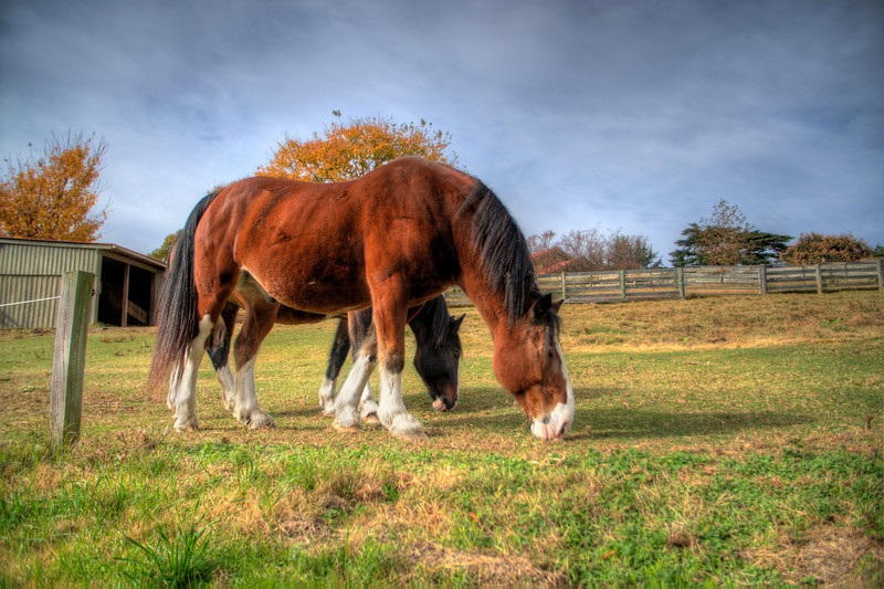 Horses at Maymont