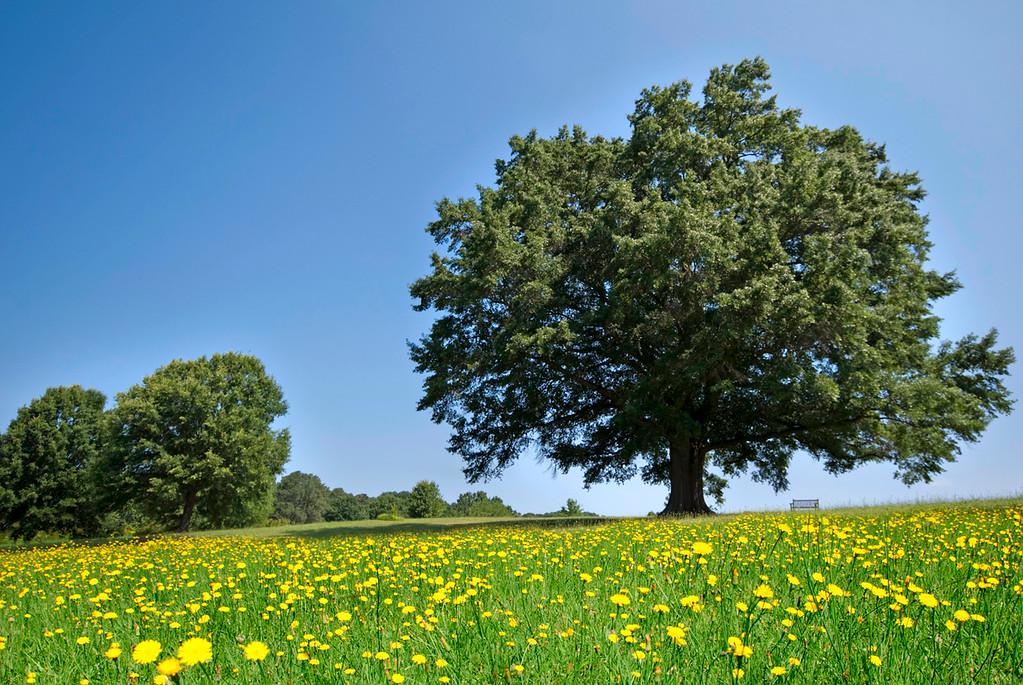Roslyn Tree