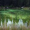 Green - Jasper 9-4-15