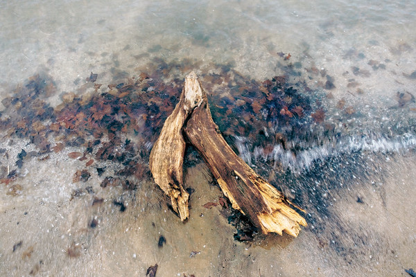 Driftwood (color)