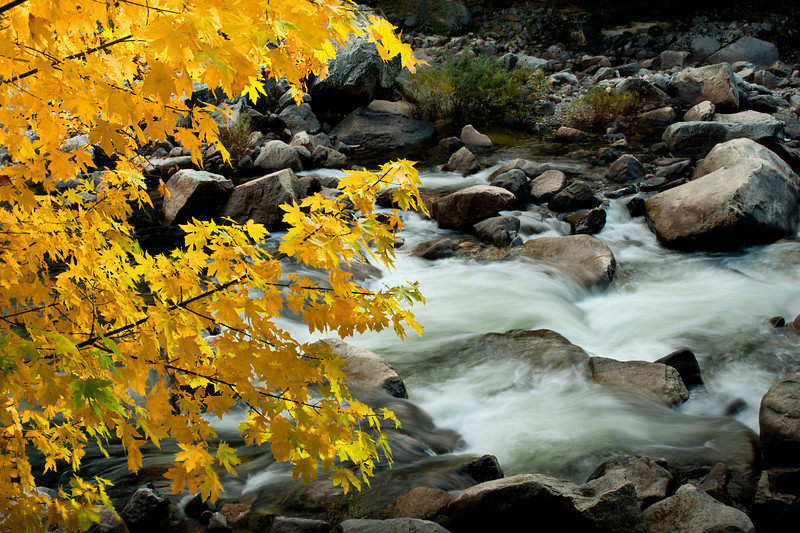Yosemite Fall Color - Merced River