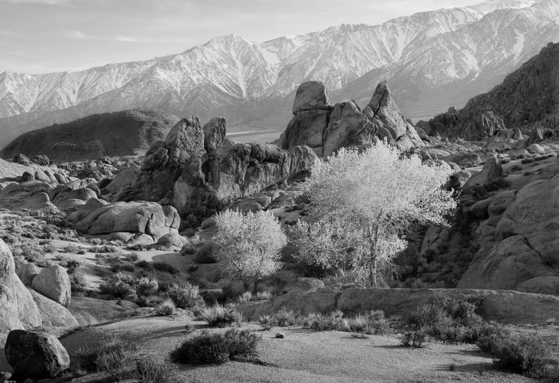 Alabama Hills Trees