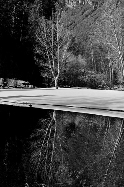 Reflection, Merced River, Yosemite NP