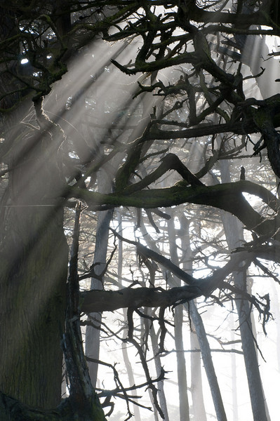 Fog , Point Lobos, California -2