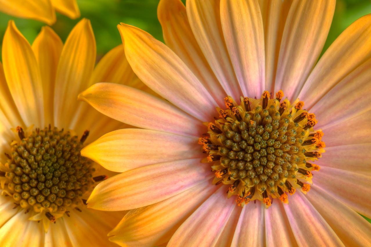 HDR  Flower_