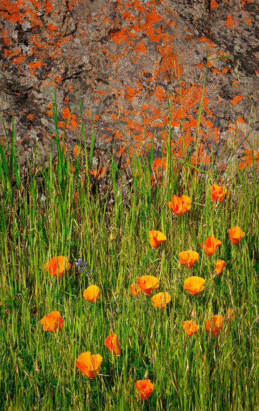 Poppy Rocks, Mt. Diablo