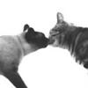 Kiss Cats (#123-2)