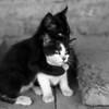 Hug Cats (#123)