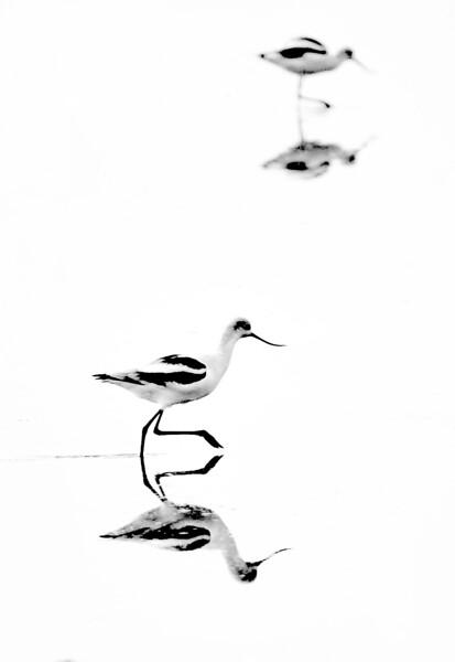 Shore Birds  (#134-2)