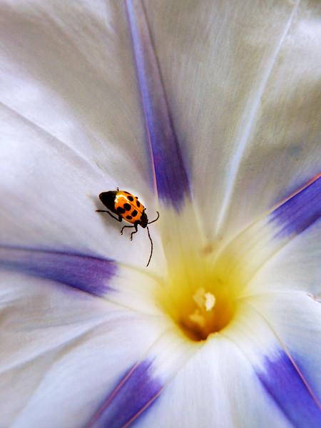 Flower Bug (#117)