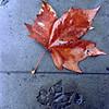 Street Leaf/Impression