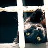 Guard Cat (#121-1)