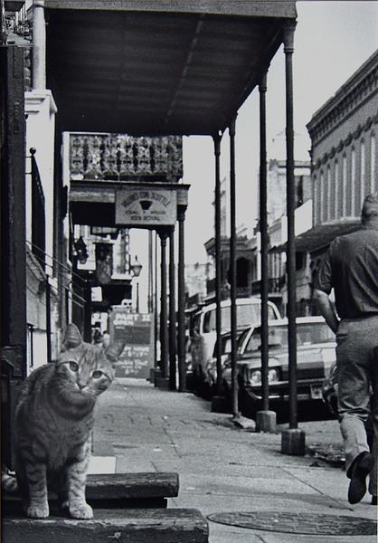 French Quarter Feline